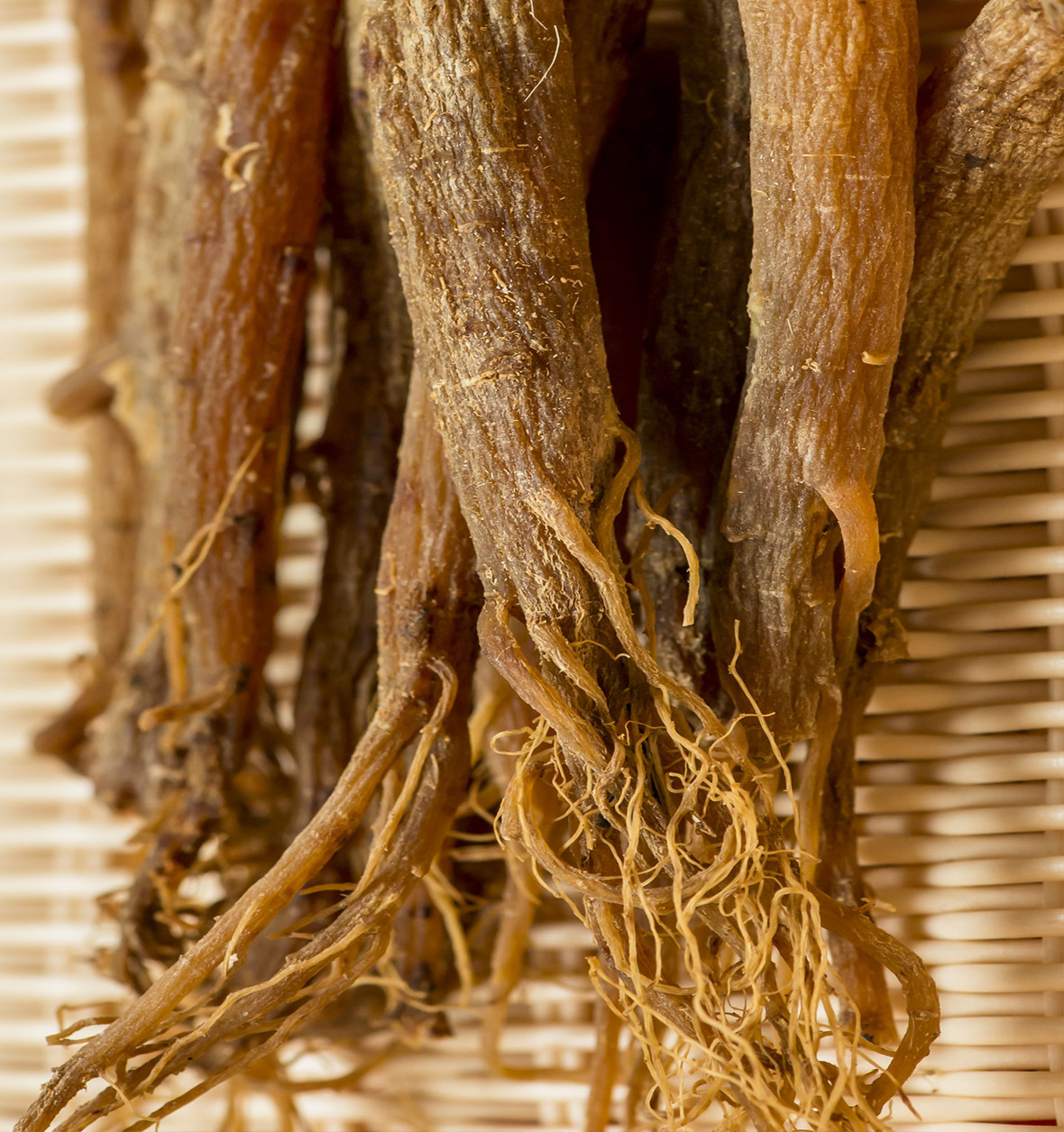 ginseng asian What root is